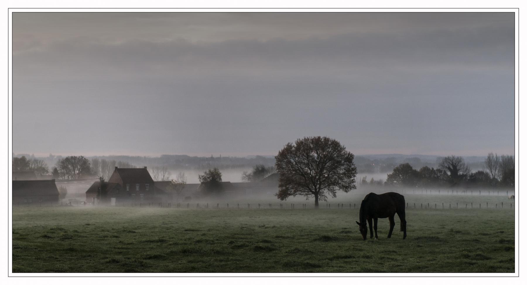 Fotograaf : Luc Cromphout